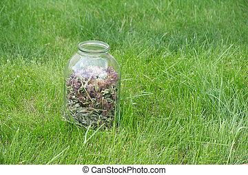 tarro de cristal, con, secado, trébol