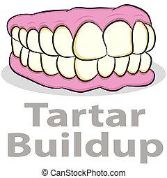tartar, buildup, på, tænder