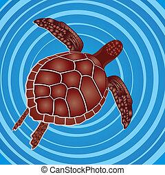 tartaruga, água