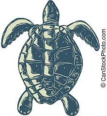 tartaruga, cima, scratchboard, vista mare