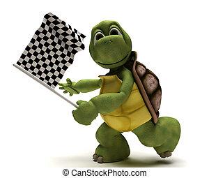 tartaruga, com, um, bandeira chequered