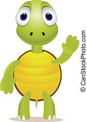 tartaruga, engraçado, pequeno