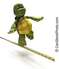 tartaruga, equilibrar, ligado, um, corda apertada