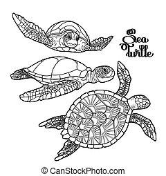 tartaruga hawksbill, mar, cobrança