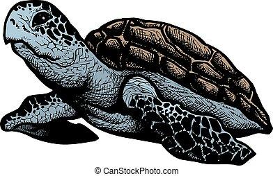 tartaruga, isolado, mar