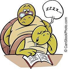 tartaruga, lição, caricatura, dormir