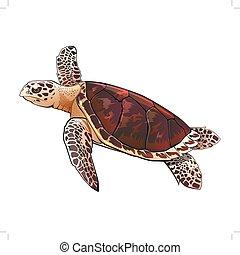 tartaruga, mare, illustrazione