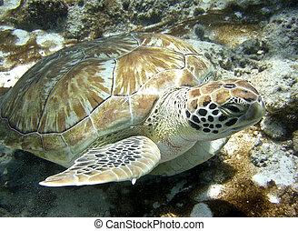 tartaruga, submarinas, mar