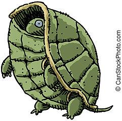 tartaruga, tímido