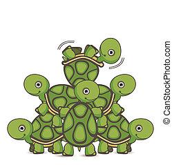tartaruga, trabalho equipe