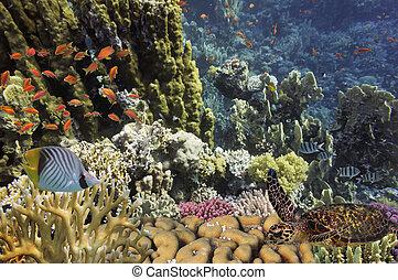 tartaruga, tropicais, recife, mar, vermelho
