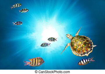 tartaruga, verde, natação