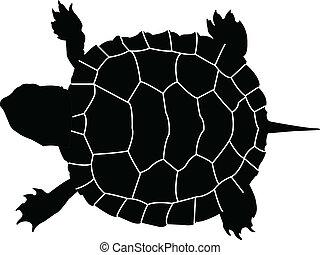 tartaruga, vetorial, -