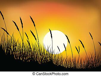 tarwe, achtergrond, gras