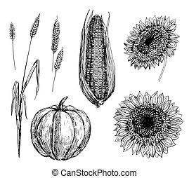 tarwe, koren, pompoen, en, zonnebloemen