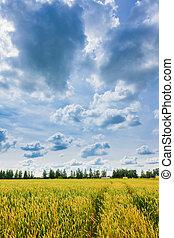 tarwe, oor, en, bewolkte hemel