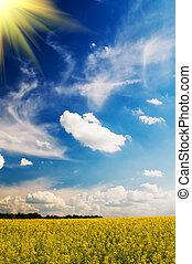 tarwe, springtime., morgen, vroeg, akker, sereniteit, zon
