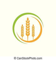 tarwe, vector, ontwerp, logo, landbouw, landbouw