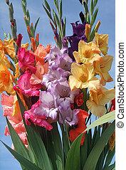 tas, fleurs, gladioli