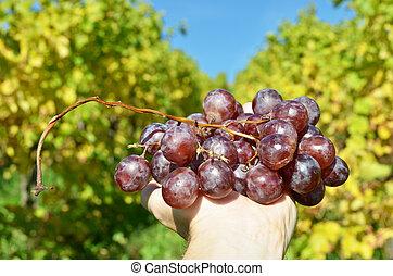 tas, raisins, mains