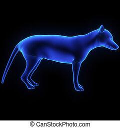 tasmania wolf - tasmania wolf is a collection of...