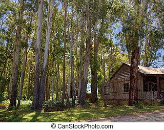 tasmanian shack