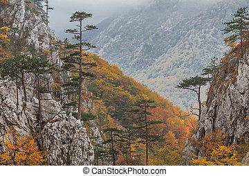 Tasnei Gorge, Romania - Tasnei Gorge protected area in Baile...