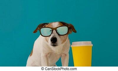 tasse papier, chien, lunettes soleil