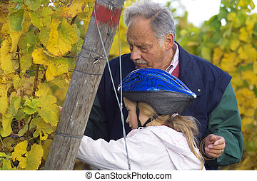 mature winemaker checking hte grapes together with hid grand child