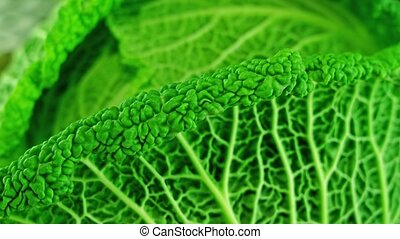 Beautiful colorful and tasty Green cabbage rotates close up with lines in the shape of veins