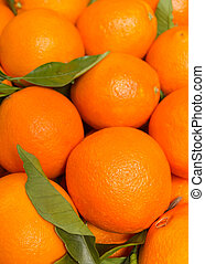 Tasty valencian oranges freshly collected - Closeup of tasty...