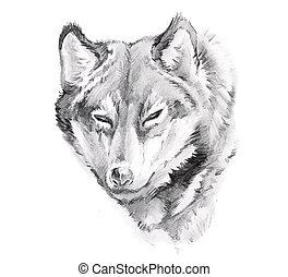 tatouage, croquis, loup, art