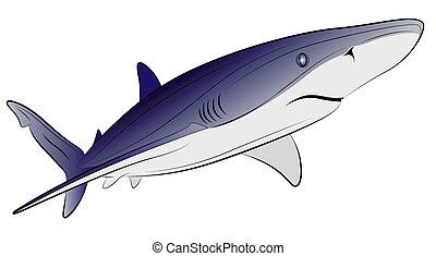 tatouage, vecteur, requin