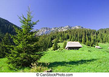 tatra, hegyek, alatt, lengyelország