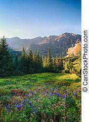 tatras, fiore, slovacchia, foresta, selvatico, montagna verde