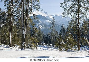 tatras,  Slovakian, Inverno, vista