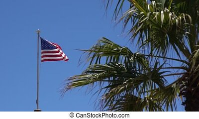 Tattered American Flag Waves in Breeze behind a palm tree