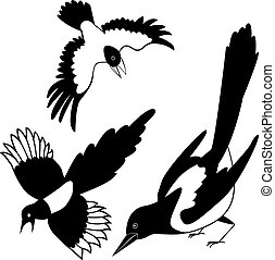 tattoo., シルエット, raven., 黒, rook., crow., magpie.
