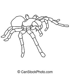 Tattoo spider tarantula on Blom background