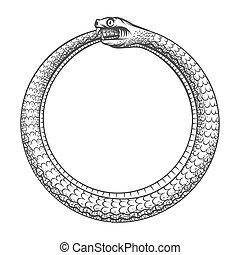 tatuaje, poseer, magia, símbolo, cola, serpiente, ouroboros., morder, su