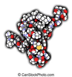 Tau protein fragment. May play a role in Alzheimer's disease. Atoms are represented as spheres with conventional color coding.