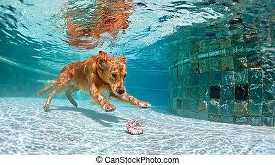 Tauchen, unterwasserwelt, schwimmender, Teich, hund