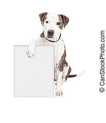 taureau fosse, chien, tenue, signe blanc