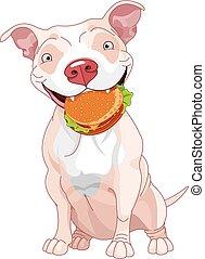 taureau fosse, hamburger, mange, chien