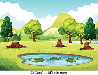 tavacska, kevés, erdő, színhely