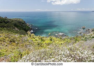 Tawharanui Peninsula blooming manuka New Zealand - Beautiful...
