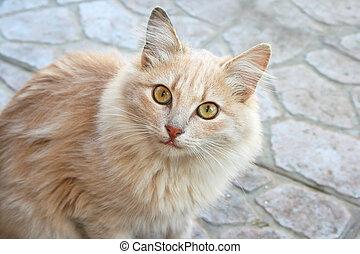 Tawny cat looking to camera.