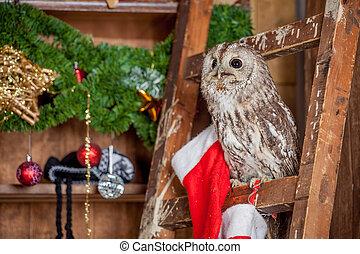 Tawny or Brown Owl, Strix aluco, - Tawny or Brown Owl, Strix...