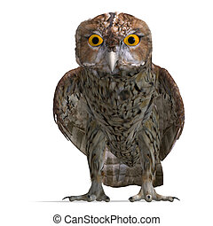 Tawny Owl Bird. 3D rendering with clipping path and shadow over white