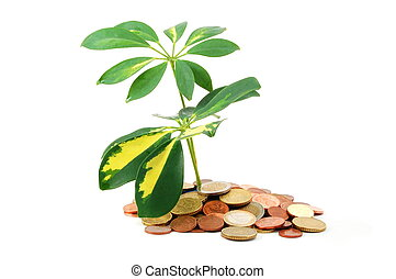 tax haven - island with money coins and leaves showing tax...